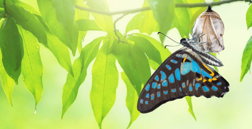 change and transformation management butterfly